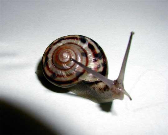 Spider worm centipede snail etc in waseda univ honjo for Ka chentapete