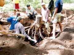 根のバイオマスを測定するためにメルクシマツ林で抜根作業を行っている様子