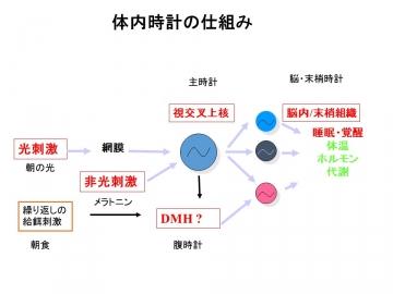 (図)体内時計の仕組み