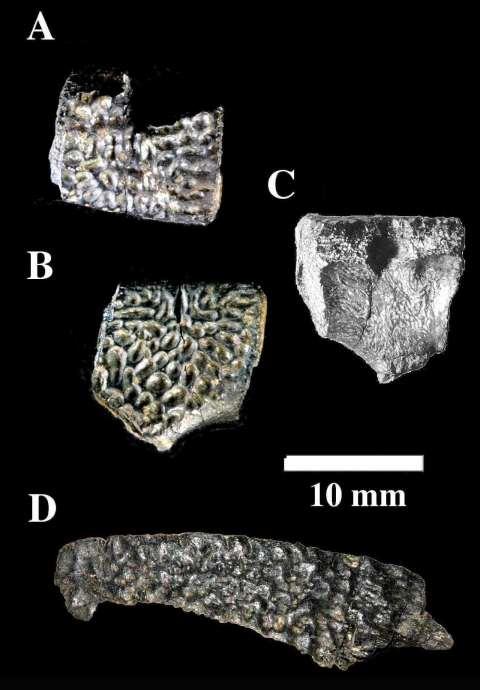 発見された化石 A・B・Cは同一化石を別角度から撮影したもの