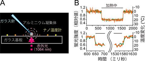 図3ナノ温度計の応答速度(A)ガラス基板上のナノ温度計に局所的な熱パルスを加えた。ガラス針の先端のアルミニウム粉末凝集体に赤外光を集光することで、周囲に同心円状の温度勾配を発生させた。(B)熱パルスに対するナノ温度計の蛍光強度の応答。2フレーム(17.3ミリ秒)以内に応答していることがわかる。