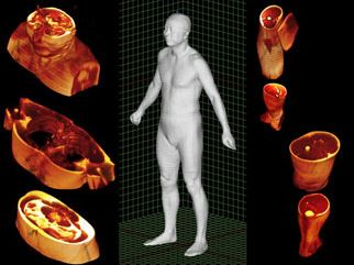 科学の力で生きた体を見る