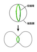 re20150324_Fig.1