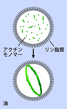 re20150324_Fig.2