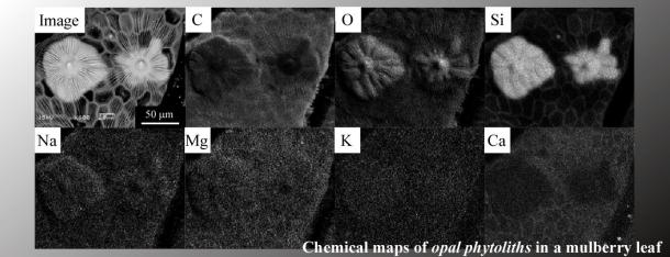 図2 電子顕微鏡による一ノ瀬クワの中のプラントオパールの元素マッピング