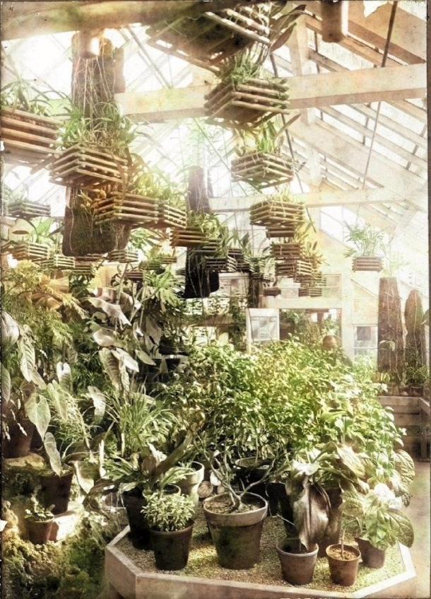 大隈邸内温室の草花 大学史資料センター写真データベース所蔵写真を本手法によって彩色加工したもの