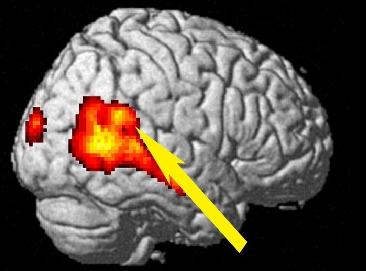 Studying the brain to understand how humans encode effort level of others