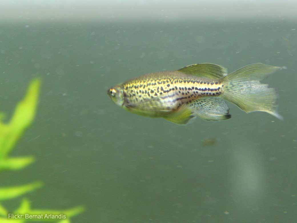 Stab injury model of zebrafish unveils regenerative processes by neural stem cells in the brain